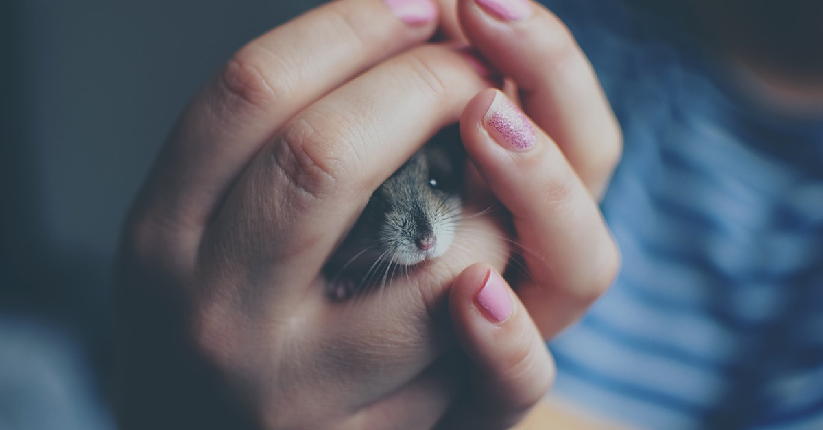 mice proof home